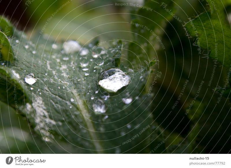 - ohne titel - Wassertropfen Blatt nass Regen Pflanze feucht Licht Hoffnung Wunsch rund Reflexion & Spiegelung grün Makroaufnahme Nahaufnahme Natur Lichtblick