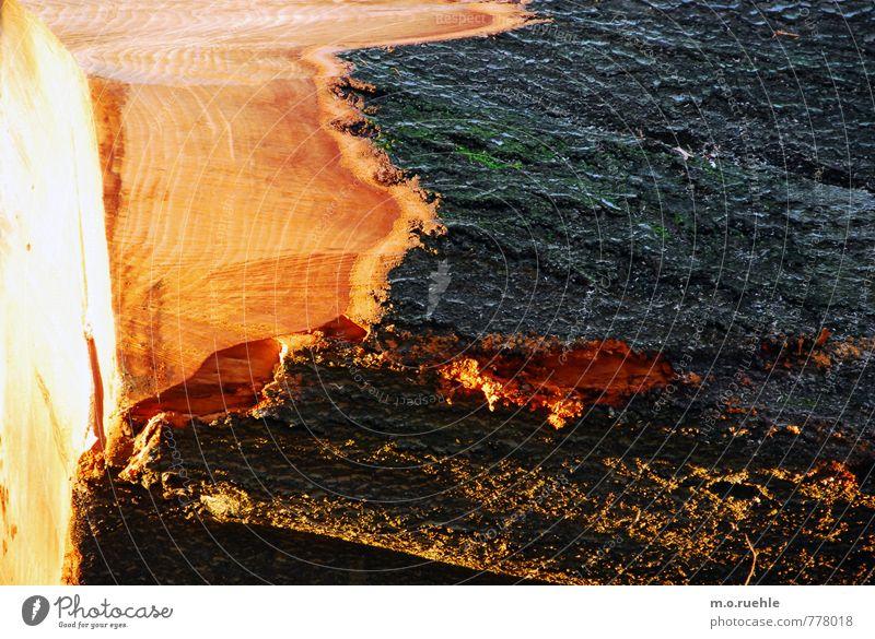 schön tot Natur Pflanze Baum Wald Umwelt Traurigkeit Gefühle Tod wild ästhetisch Vergänglichkeit Trauer Wut Zerstörung Trennung Umweltschutz