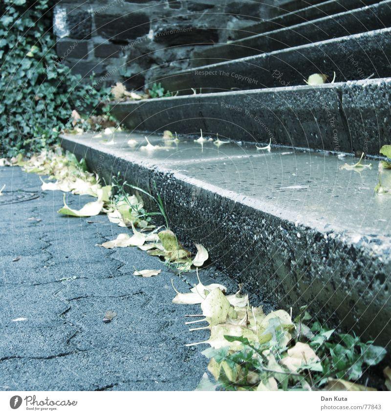 Stufenherbst Blatt Herbst Wand laufen nass Beton hoch Treppe Kopfsteinpflaster Marmor z