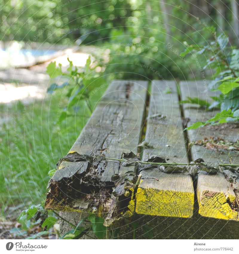 Bank - rott Schwimmbad Freibad Gartenbank Holzbank Parkbank alt kaputt gelb grau grün Senior Krise Verfall Vergänglichkeit Geldinstitut morsch faulig verrotten