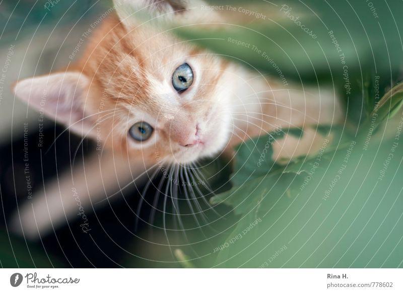 Katzen gehen immer Blatt Tier Tierjunges beobachten niedlich Neugier Haustier