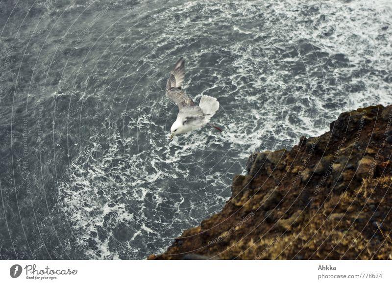 durchstarten Wind Wellen Küste Meer Wildtier Vogel 1 Tier sportlich frei maritim wild Beginn fliegen Möwe unten Farbfoto Außenaufnahme Menschenleer
