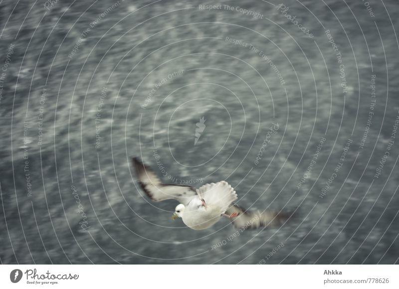 Tiefflieger Natur Wellen Meer Vogel 1 Tier Coolness exotisch wild Tapferkeit Mut Einsamkeit Problemlösung träumen Umzug (Wohnungswechsel) Unendlichkeit Möwe