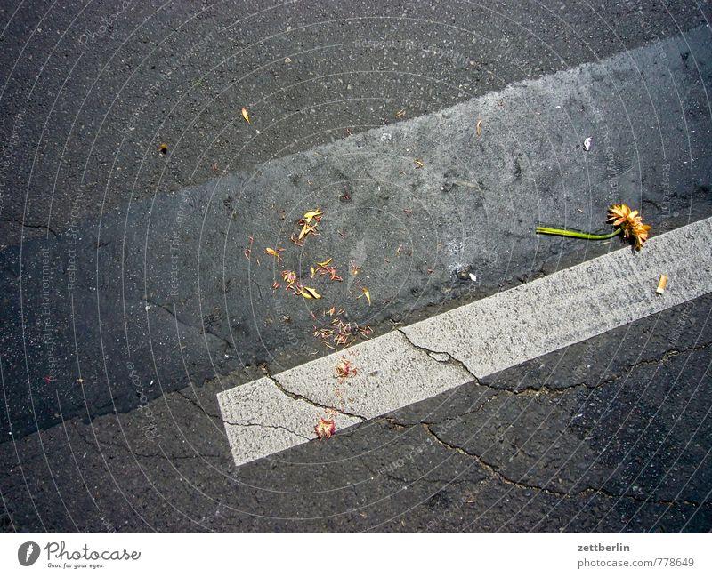 Sag es mit Blumen! Pflanze Blume Straße Linie Schilder & Markierungen Dekoration & Verzierung kaputt Asphalt Müll Blumenstrauß Karneval Liebeskummer Fahrbahnmarkierung wegwerfen Sambatänzer Karnevel der Kulturen