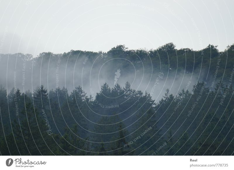 Nebel Natur Landschaft Himmel Frühling Sommer Herbst Wetter schlechtes Wetter Baum Grünpflanze Wildpflanze Tanne Wald Nadelwald alt dunkel grün schwarz weiß