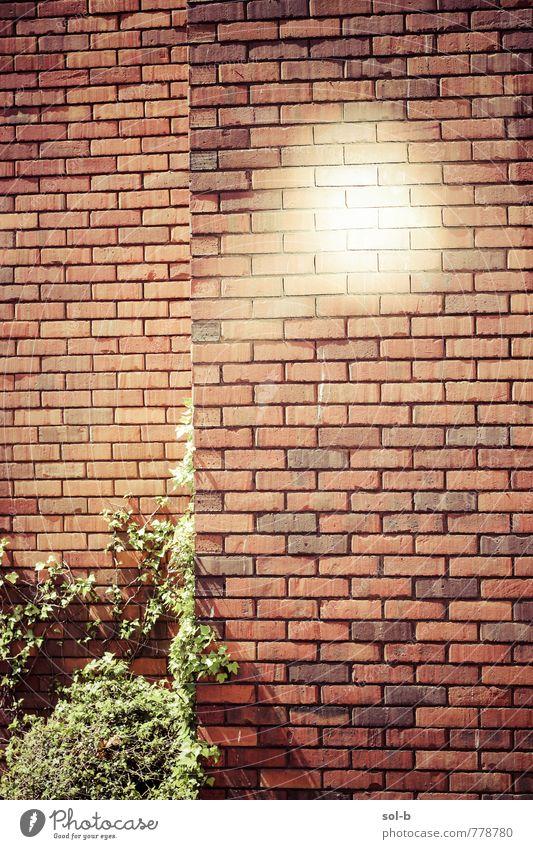 UFO Glück Leben Sommer Sonne Häusliches Leben Pflanze Sträucher Mauer Wand Backstein heiß hell Optimismus Neugier Hoffnung Glaube Beratung Wunsch ziegelrot