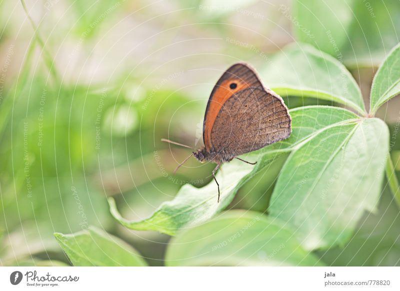 schmetterling Natur schön Pflanze Sommer Blatt Tier Gras klein Garten elegant wild Wildtier frei ästhetisch weich Schmetterling