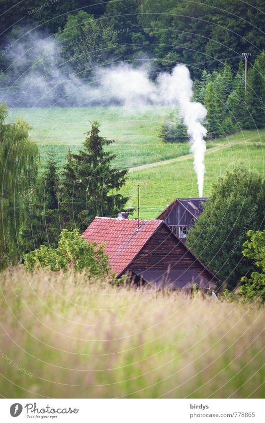 kühler Sommer Natur Landschaft Frühling Baum Wiese Wald Haus Bauernhof Rauch Abgas Rauchen Duft positiv ruhig Einsamkeit Idylle Kaminfeuer ländlich Landleben