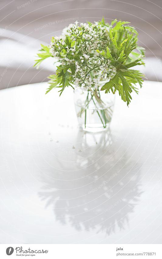 blümsche Pflanze Blume Blumenstrauß Vase ästhetisch elegant schön feminin weich Farbfoto Innenaufnahme Menschenleer Textfreiraum unten Tag Licht Schatten