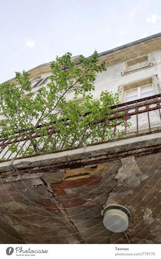 Der Lauf der Dinge Natur Himmel Sommer Pflanze Baum Sträucher Haus Fassade modern Moral Verfall Vergangenheit Vergänglichkeit Lampe Fenster Balkon verfallen