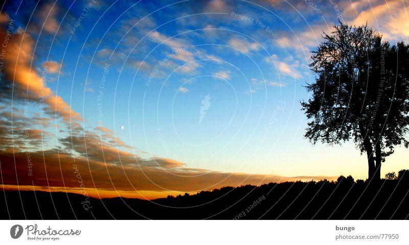 Liebe Baum Wolken schlechtes Wetter dunkel bedrohlich Dämmerung Nacht Horizont Sonnenuntergang träumen Traumwelt Einsamkeit harmonisch Farbenspiel Romantik