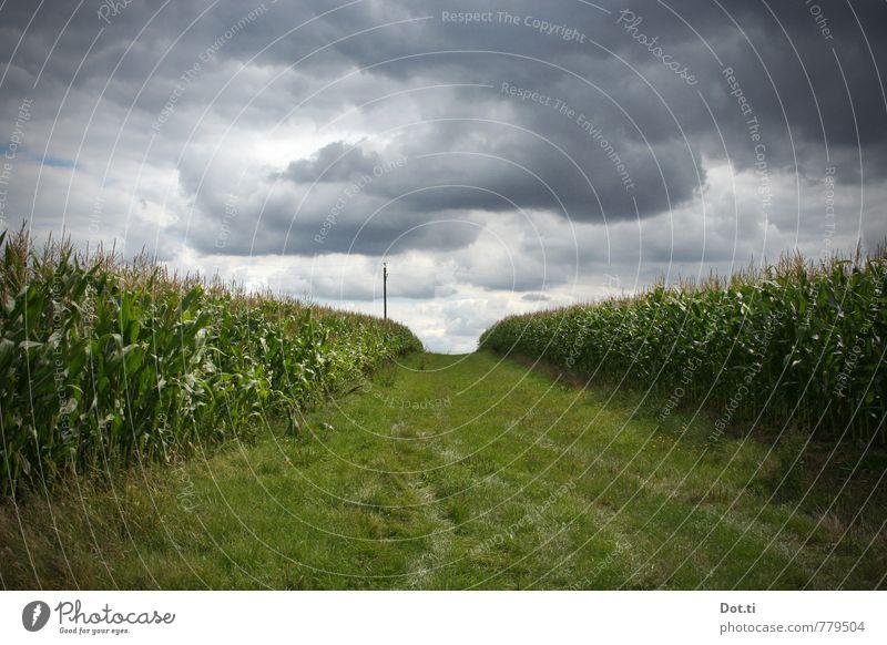 stormchasing Umwelt Natur Landschaft Pflanze Himmel Wolken Gewitterwolken Sommer Klima Klimawandel Wetter Unwetter Nutzpflanze Feld bedrohlich dunkel Angst