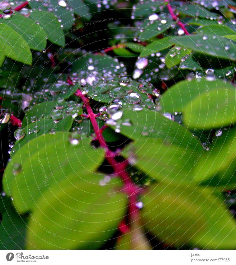 Nass geworden Blatt Herbst Regen Wassertropfen nass