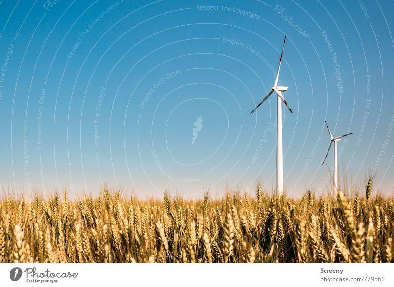 Windkraftsammler #3 Technik & Technologie Energiewirtschaft Erneuerbare Energie Windkraftanlage Umwelt Landschaft Himmel Wolkenloser Himmel Sonnenlicht Frühling