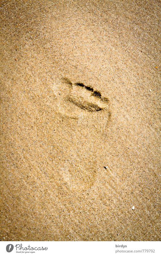 Spuren hinterlassen Sommerurlaub Strand Fußspur Sand ästhetisch positiv Wärme ruhig Leben Reinheit Bewegung einzigartig Natur rein Wege & Pfade Barfuß Tierfuß