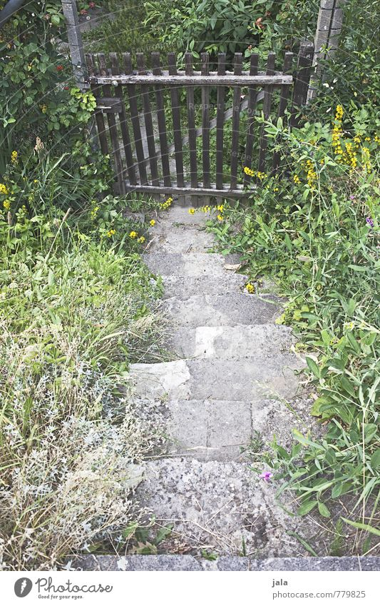 treppe Natur Pflanze Blume natürlich Garten Treppe Tür Sträucher Tor Grünpflanze Wildpflanze