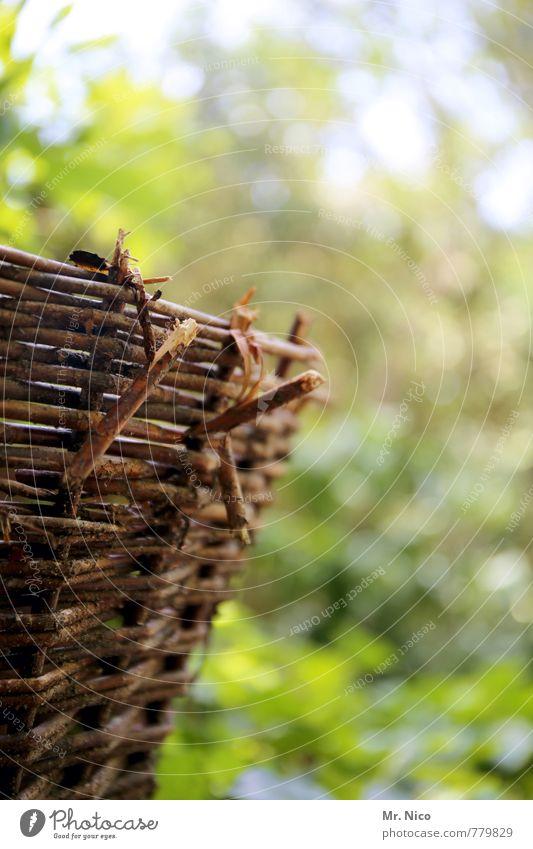 körbchengröße Picknick Umwelt Natur Frühling Sommer Herbst Schönes Wetter Pflanze Baum Sträucher Garten Park braun Weidenkorb Korb Weidengeflecht