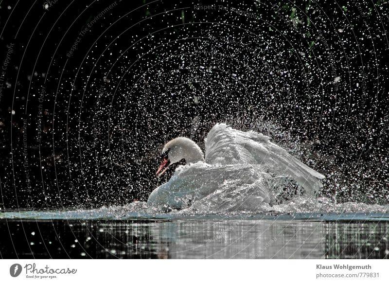 Papas Badetag Natur schön weiß Wasser Sommer rot Tier schwarz Umwelt Frühling Schwimmen & Baden rosa Vogel elegant Wildtier Schönes Wetter