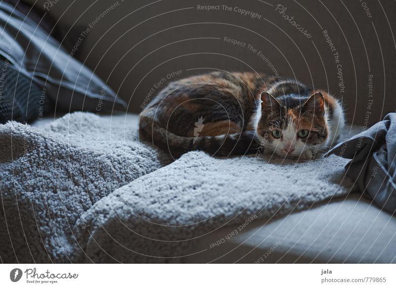 sofatiger Häusliches Leben Wohnung Sofa Tier Haustier Katze 1 genießen liegen ästhetisch schön Farbfoto Innenaufnahme Menschenleer Dämmerung Licht Schatten