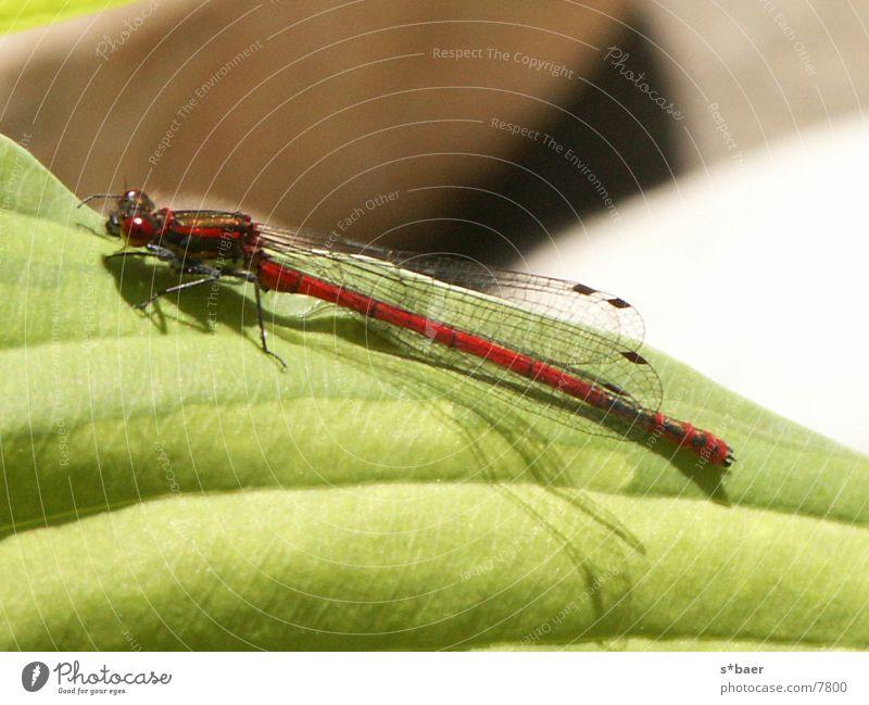 Im Zeichen der Libelle Teich Insekt