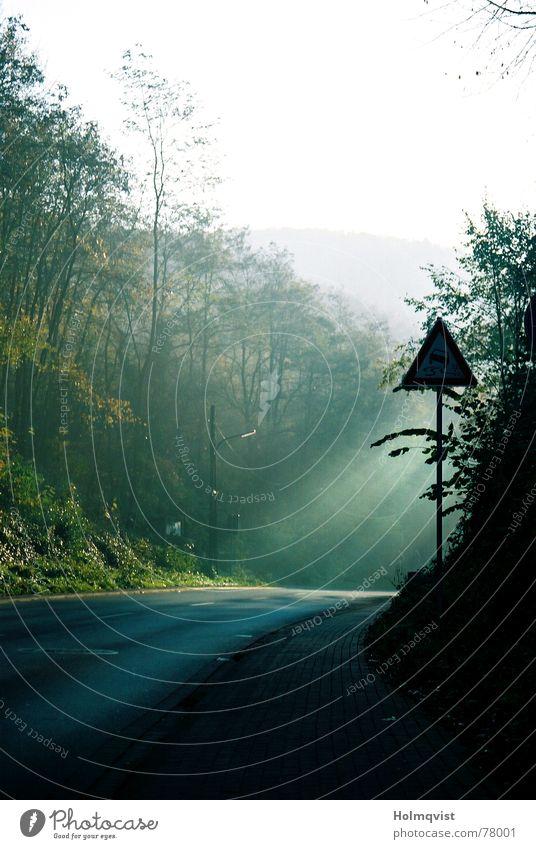 Straße ins Licht Baum Herbst Wege & Pfade Nebel Schilder & Markierungen Asphalt Strahlung Verkehrswege Kurve Lichtstrahl