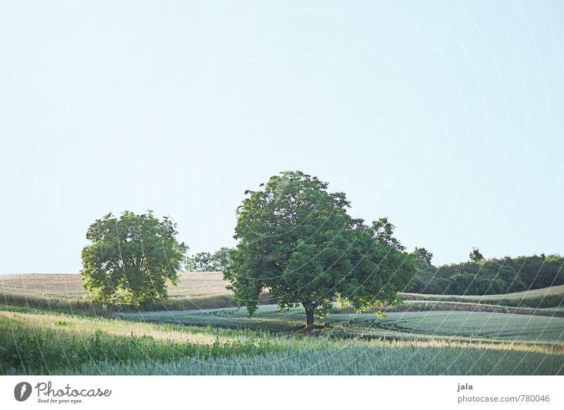 ländlich Umwelt Natur Landschaft Pflanze Himmel Baum Gras Sträucher Grünpflanze Nutzpflanze Wildpflanze Feld natürlich positiv Farbfoto Außenaufnahme