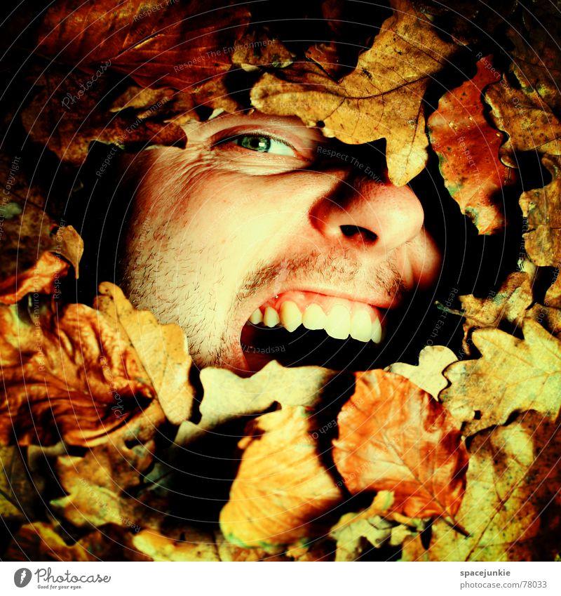 Ein herbstliches Schreibild Herbst Blatt schreien Mann beerdigen gefangen Freak Herbstlaub Jahreszeiten alt Gesicht Angst Natur mögen