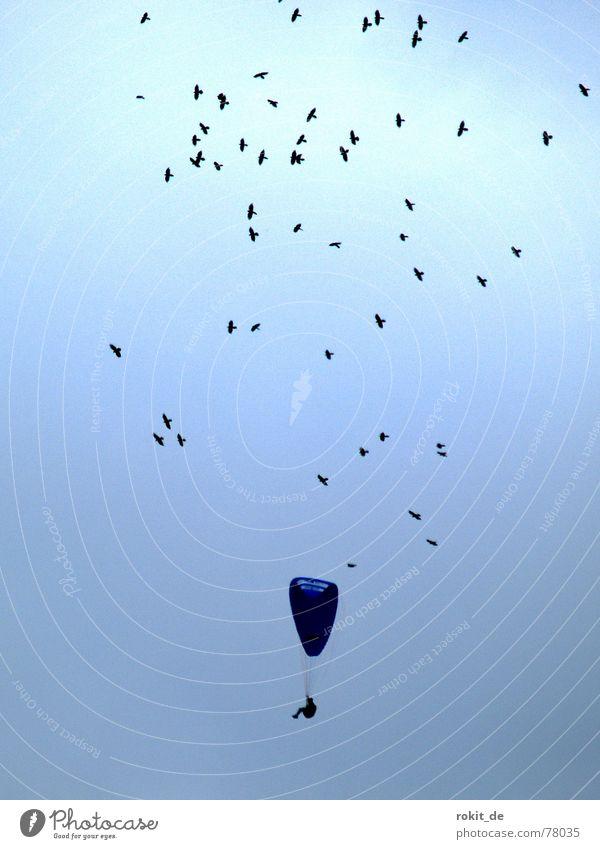 Sei gut zu Vögeln... sie zeigen dir die Thermik. Himmel blau Freude schwarz Sport Spielen Wärme Luft Vogel Flugzeug Luftverkehr Physik Schweben aufsteigen