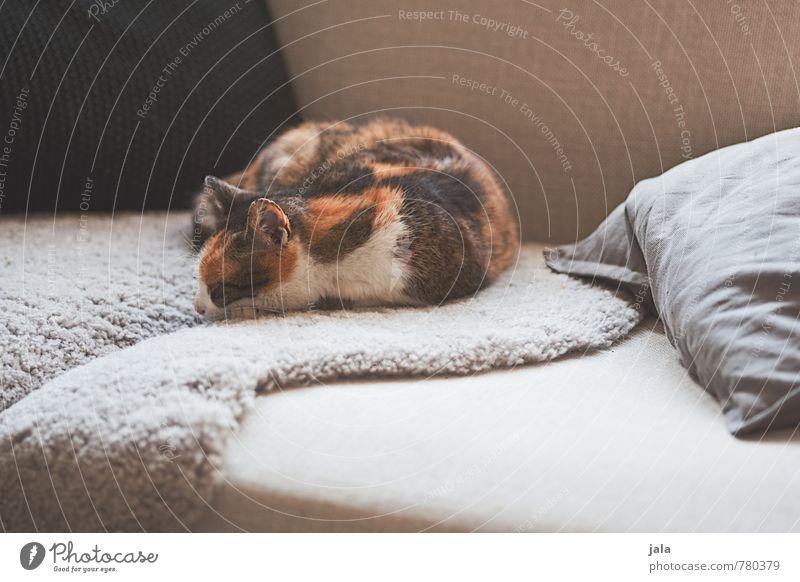mittagsschlaf Häusliches Leben Wohnung Sofa Tier Haustier Katze 1 liegen schlafen Geborgenheit Farbfoto Innenaufnahme Menschenleer Tag Tierporträt