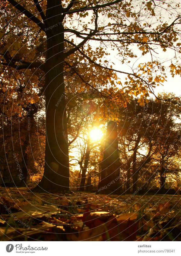 es werde Licht II Himmel Sonne ruhig Blatt Herbst Tod Traurigkeit Denken Stimmung Religion & Glaube Trauer Frieden Ende Vergänglichkeit Unendlichkeit