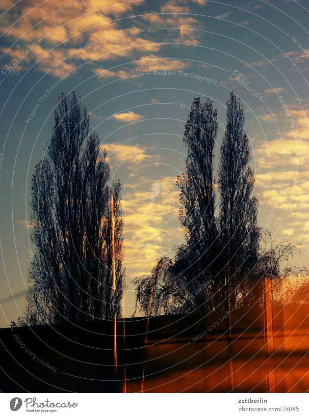 Wilhelmsruh Baum Pappeln Wolken Cirrus Reflexion & Spiegelung S-Bahn Abend Himmel reflektion Fensterscheibe wilhelmsruh