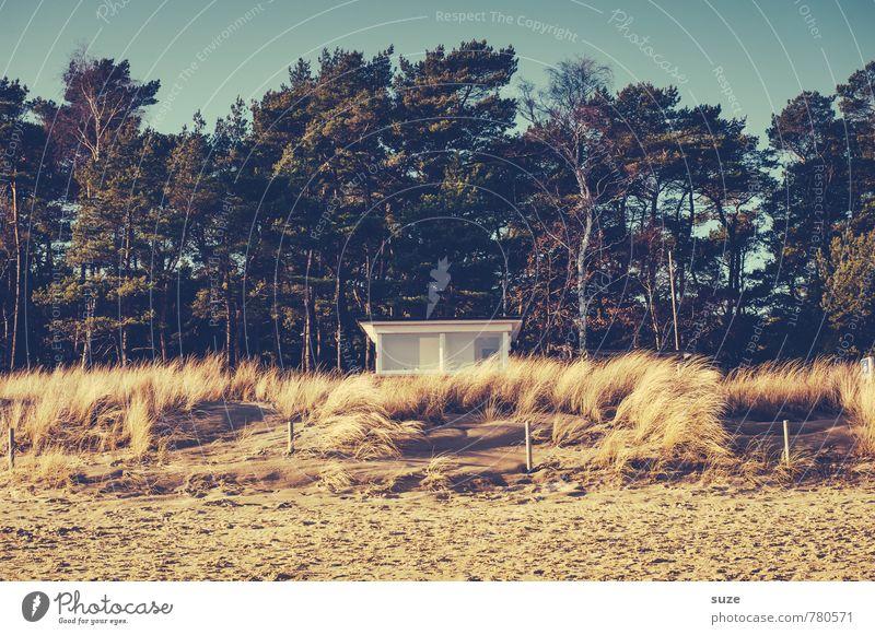 Schaulustiges im Strandhafer Himmel Natur Ferien & Urlaub & Reisen Sommer Einsamkeit Haus Strand Wald Küste Sand authentisch Aussicht Sicherheit Ostsee Hütte Wachsamkeit
