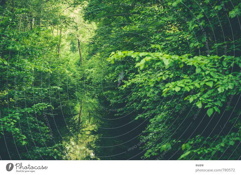 Dasselbe in Grün harmonisch Zufriedenheit Erholung ruhig Umwelt Natur Landschaft Pflanze Wasser Klima Baum Park Flussufer See Oase Wachstum nachhaltig grün