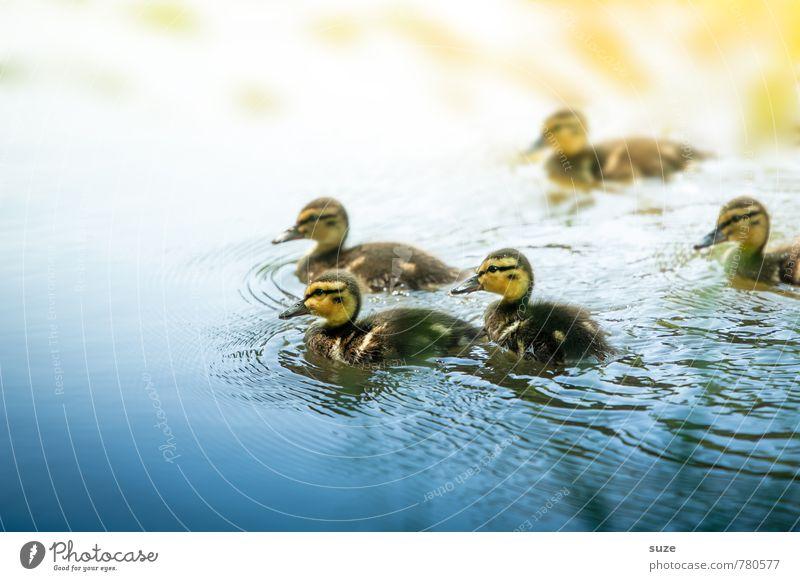 5 tierische Weichmacher Schwimmen & Baden Umwelt Natur Tier Wasser Wetter Teich See Wildtier Vogel Tiergruppe Tierjunges klein Neugier niedlich wild blau gelb