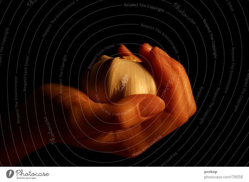 Knofinger Hand Gesundheit Finger festhalten Gemüse Medikament Heilpflanzen Knoblauch Gesunde Ernährung Frauenhand Hausmittel Knoblauchzehe