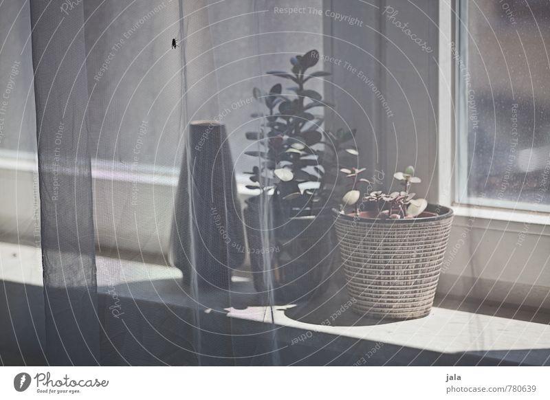 fliege Häusliches Leben Wohnung Dekoration & Verzierung Raum Pflanze Topfpflanze Zimmerpflanze Fenster Fensterbrett Vase Blumentopf Vorhang ästhetisch Fliege