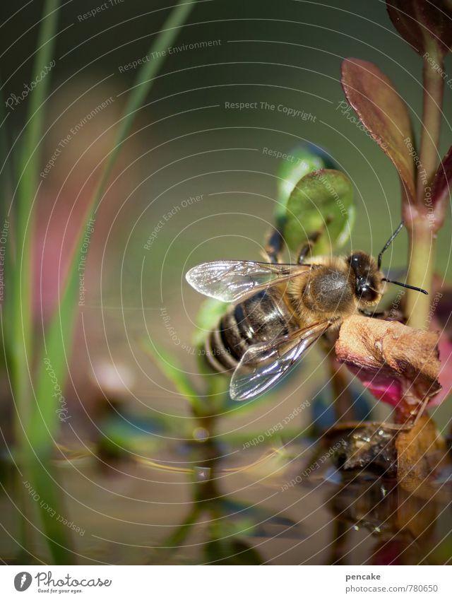 teichträume | pilotenbrille Natur Pflanze Wasser Sommer Erholung Blatt Tier fliegen Urelemente Flügel Biene Meditation Sonnenbrille Teich Wasserpflanze