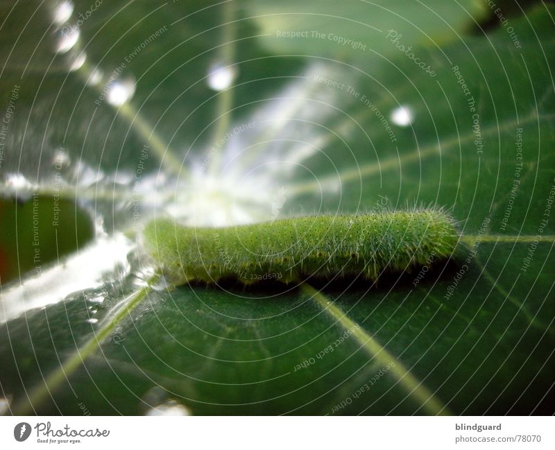 Die kleine Raupe Nimmersatt Wasser grün Blatt Haare & Frisuren Regen Linie Wassertropfen frisch Schwimmbad Storch Gefäße Photosynthese