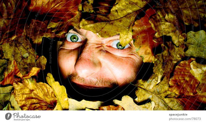 Ein herbstliches Schreibild (2) Mann Natur alt Gesicht Blatt Herbst Angst schreien Jahreszeiten gefangen Freak Herbstlaub mögen beerdigen