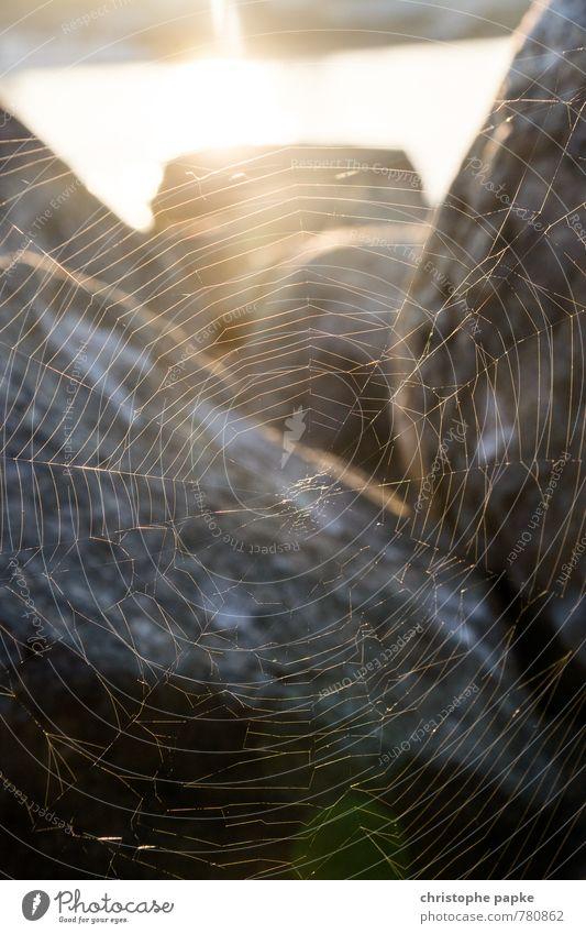 Volle Netzabdeckung Sonnenaufgang Sonnenuntergang Sonnenlicht Stein fangen hängen Spinnennetz spinnen Netzwerk netzartig Verbindung gewebt Strukturen & Formen