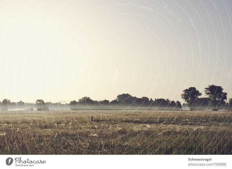 morning glory Umwelt Natur Landschaft Pflanze Wolkenloser Himmel Sonne Sonnenlicht Schönes Wetter Nebel Baum Gras Feld natürlich blau gelb gold grün Stimmung