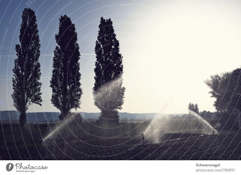 pschtacktacktacktacktackpscht Umwelt Natur Landschaft Pflanze Erde Wasser Wassertropfen Himmel Sonne Sonnenaufgang Sonnenuntergang Wetter Schönes Wetter Baum