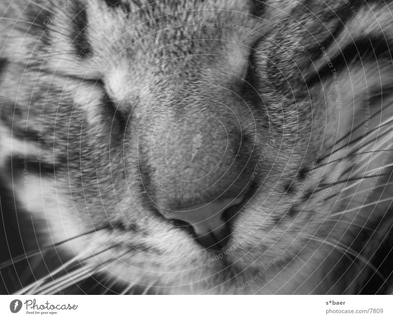 schlafende Katze Nahaufnahme Katze schlafen