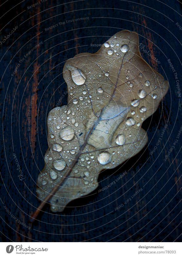 Herbsttränen Blatt Holz Faser nass Reflexion & Spiegelung Tau schwarz feucht dunkel Schlagschatten Wassertropfen fließen tauen liquide Trauer grau braun morsch