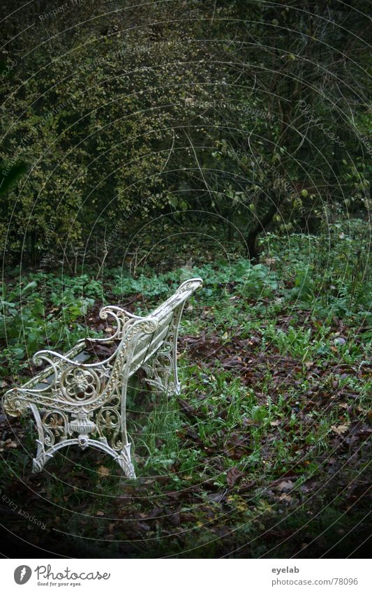Mr Autumn, goodbye - Hello Mrs Winter ! Pflanze grün weiß Baum Einsamkeit Blatt ruhig dunkel Herbst Garten Regen Park Sträucher Hoffnung Trauer