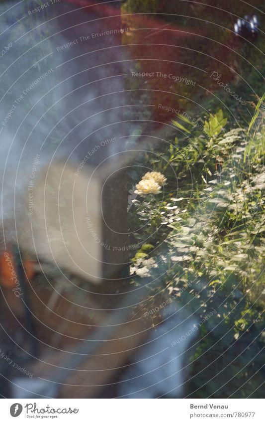 insideout Werkstatt hell Blume Fenster Hobelbank Holz chaotisch Natur Garten doppelt Glas Gras Blatt Blüte grün gelb Folie Kasten Ecke Farbfoto Außenaufnahme