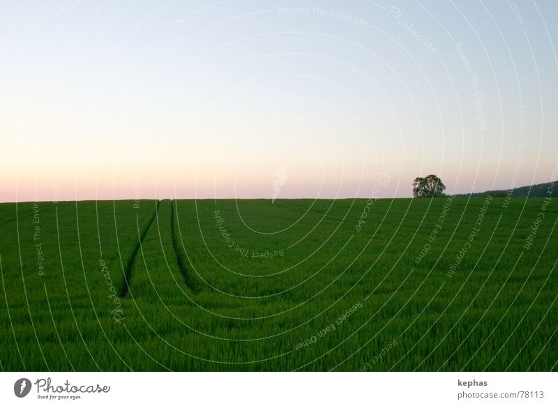 Einsamer Baum im Felde Sonnenuntergang Dämmerung grün Einsamkeit Ferne Horizont Getreide Landschaft Himmel Abend Schönes Wetter Abenddämmerung