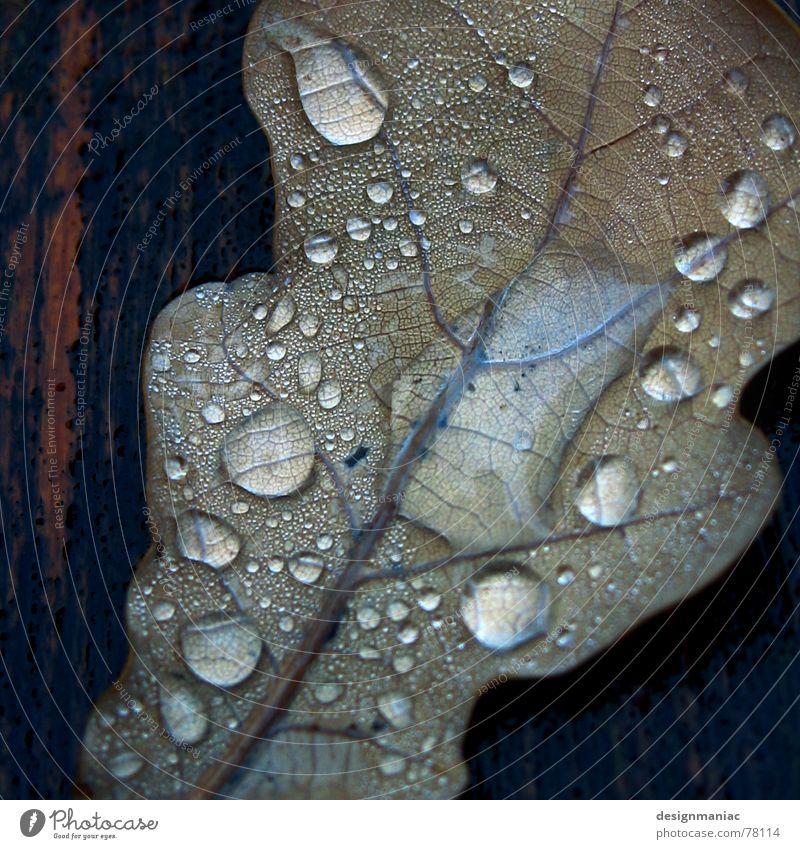 Nasskalt Blatt Holz Faser nass Reflexion & Spiegelung Tau schwarz feucht dunkel Schlagschatten Wassertropfen fließen tauen liquide Trauer Herbst grau braun