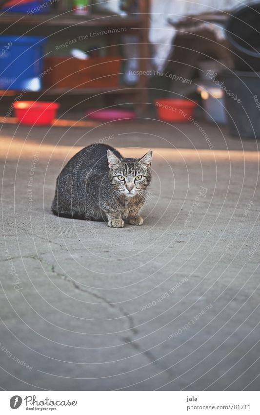mäusefänger Gebäude Tier Haustier Katze 1 Neugier Schüchternheit sitzen beobachten Farbfoto Außenaufnahme Menschenleer Textfreiraum unten Tag Licht Schatten