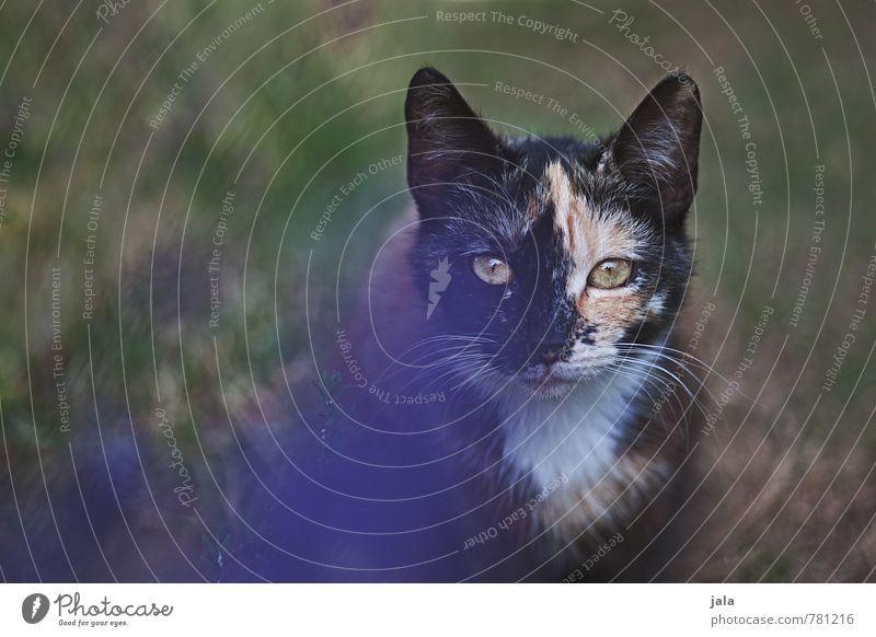 peper Katze Natur schön Pflanze Tier Tierjunges Gras natürlich beobachten niedlich Neugier Tiergesicht Haustier